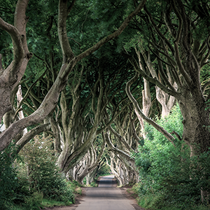 Photographie d'arbres en vente: Dark Hedges